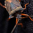 THE HITCHHIKER FOREST SHIELDBUG by NICK COBURN PHILLIPS