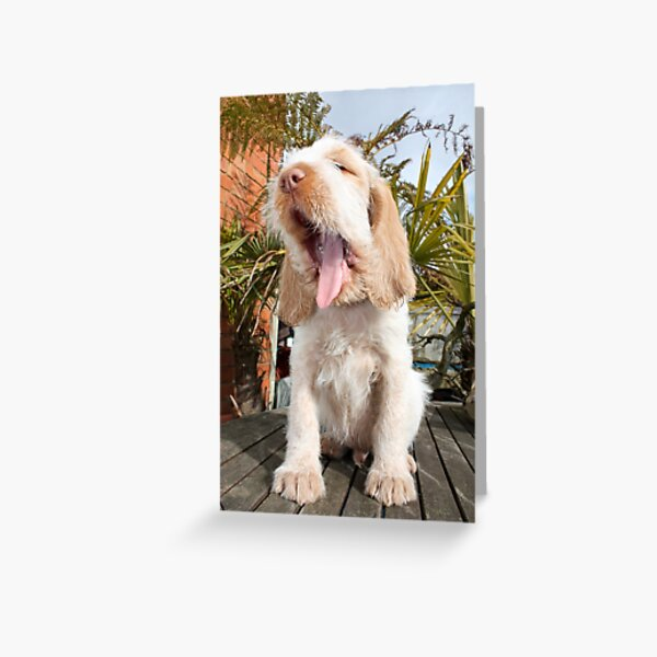 Yawning Spinone Puppy Greeting Card
