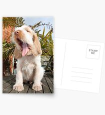 Orange and White Italian Spinone Puppy Dog Postcards