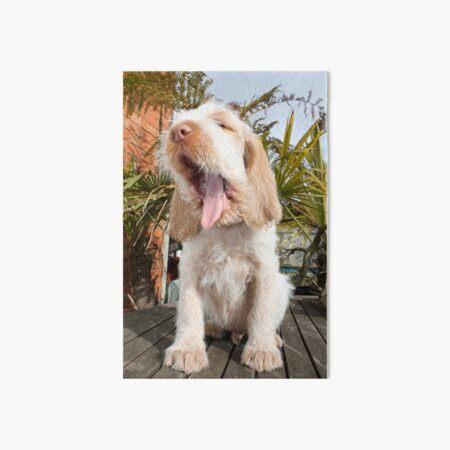 Yawning Spinone Puppy Art Board Print