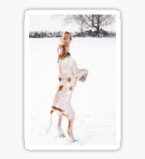 Snow Catching Spinone Sticker