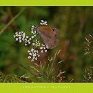 Macro: Beautiful  Nature - 11 by houk