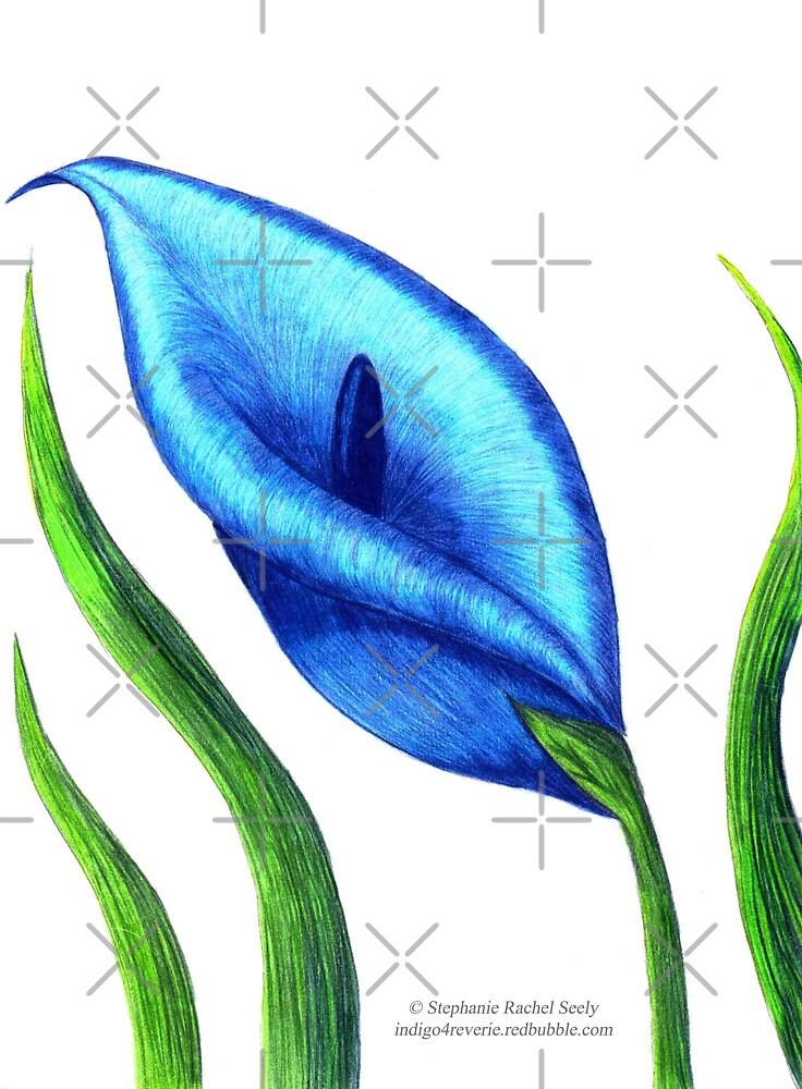 The Blue Lily by Stephanie Rachel Seely