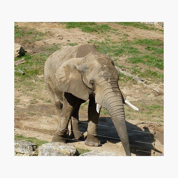 Elephant  Impression photo