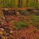 stone Query by Joshua Peck