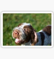 Spinone Puppy Smile - Brown Roan Italian Spinone Puppy Dog Head Shot Sticker