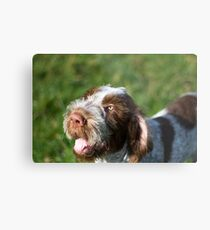 Spinone Puppy Smile - Brown Roan Italian Spinone Puppy Dog Head Shot Metal Print