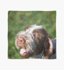Spinone Puppy Smile - Brown Roan Italian Spinone Puppy Dog Head Shot Scarf