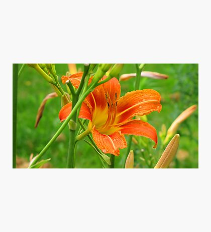Reminder of Summer Photographic Print