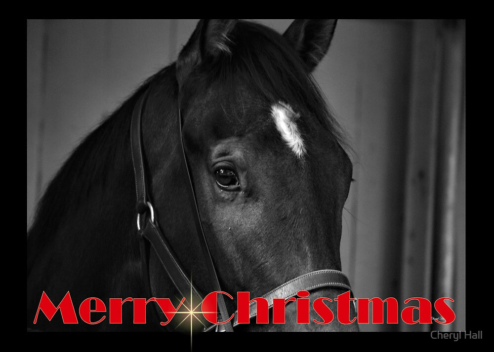 HORSE BLACK & WHITE CHRISTMAS CARD - MERRY CHRISTMAS by Cheryl Hall