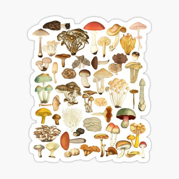 Mushroom Lover Botanical Fungi Plants Morel Psychedelic Mushroom Forager Mushroom Gift Sticker