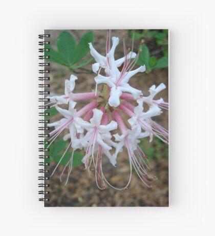 Swamp Azalea (Rhododendron viscosum) Spiral Notebook
