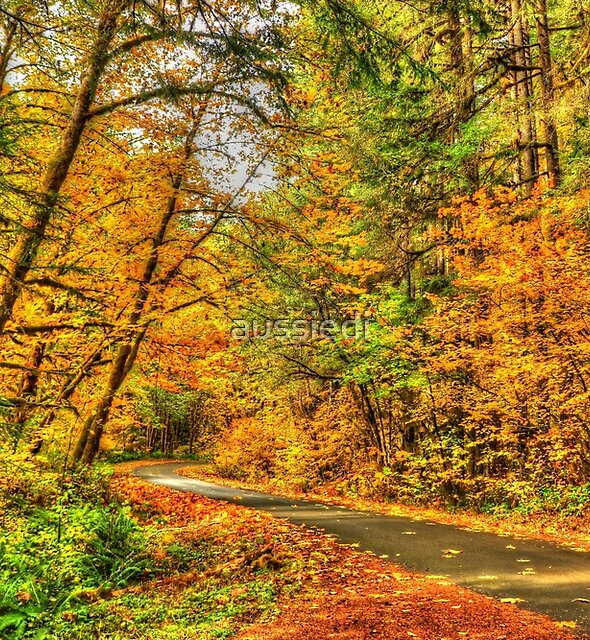Autumn in the Willamette National Forest by aussiedi