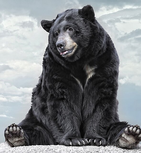 Lions & Tigers & Bears, Oh My! by Ann J. Sagel