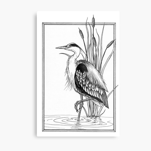 Great blue heron and cattail ink illustration Metal Print