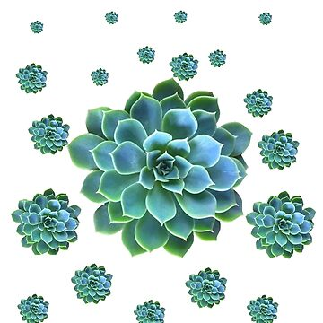 #1 BLUE SUCCULENT WHITE  GARDEN PLANTS   by sharlesart