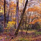 Autumn in the Forest by Tibby Steedly