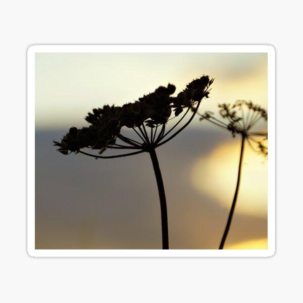 Seedhead in silhouette Sticker
