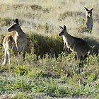 On the lookout near Longreach. North Queensland by hans peðer alfreð olsen