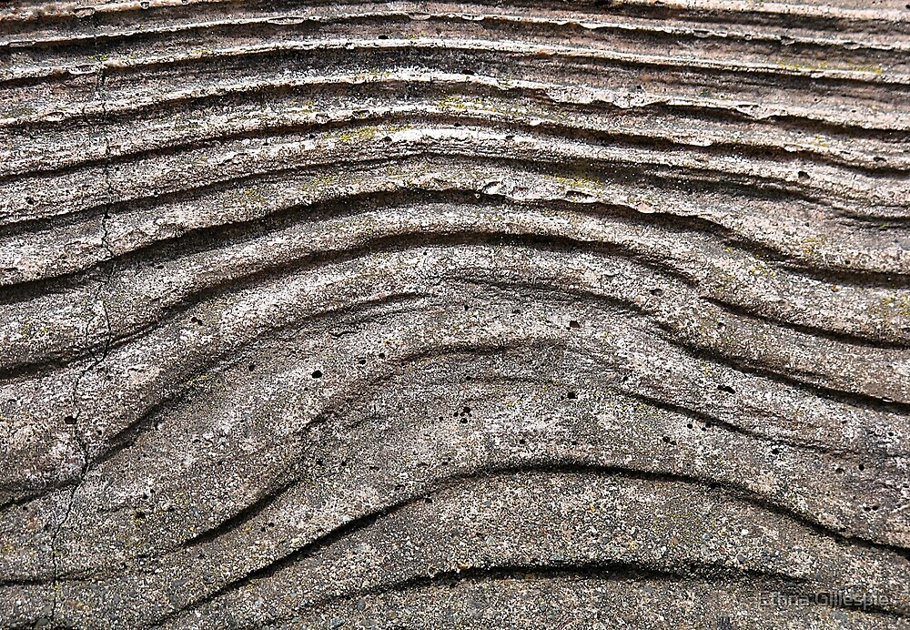 Concrete Wood  by Ethna Gillespie