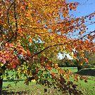 South Brent Autumn Colours by lezvee