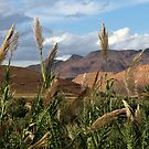 Gorge du Ziz, Morocco by helenlloyd