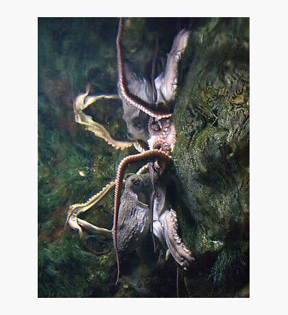 Octopus Reflection Photographic Print