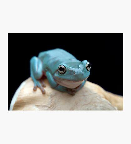 The happy frog Photographic Print