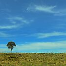 Lone tree near Grafton by myraj