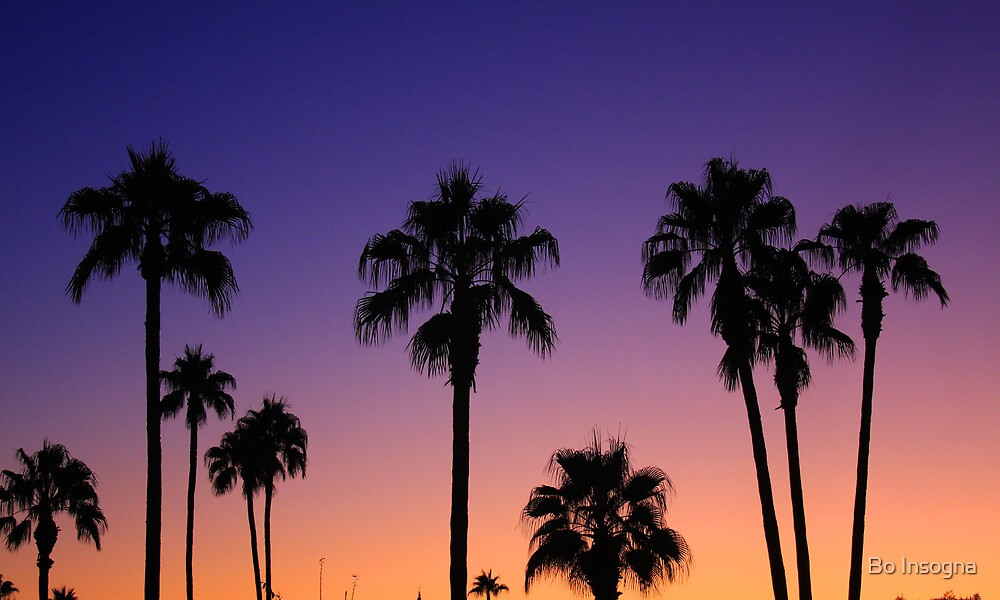 """Palm Tree Sunset Color"" By Bo Insogna"