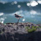 Sandpiper at Akumal by Chris Monks