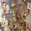 Peeling bark by Brett Thompson