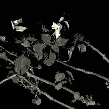Begonia Shades Dark Floral by LindasPhotoArt