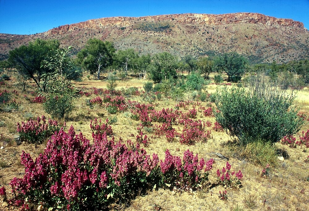 a vast Australia landscape by beautifulscenes