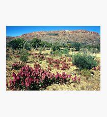 a vast Australia landscape Photographic Print