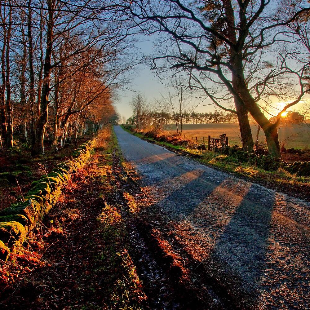 Autumn Receeds by Panalot
