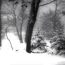 Winter Winds by DeerPhotoArts