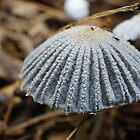 mini mushroom very macro by BigAndRed