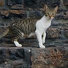 Katze - neugirig von laura-S