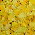 Gingko by Nancy Barrett