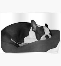 sleeping Poster