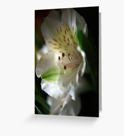 Simply Delicate Greeting Card