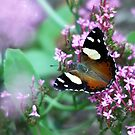 Butterfly Bliss by Steve Chapple
