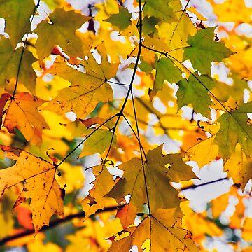 Fall Leaves by imagetj