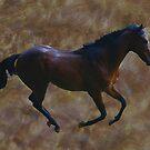 Running Free by laureenr