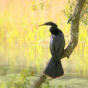 Anhinga in Dreamland by AuntDot