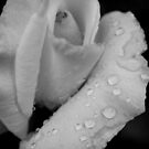 White Rose in Black and White by Michelle BarlondSmith