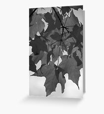 Red Maple in Black and White Greeting Card