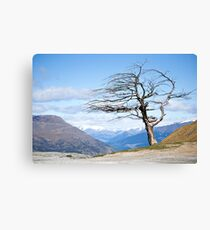 Crown Pass, New Zealand Canvas Print