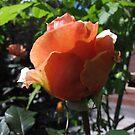 Glowing Rose by skyhorse